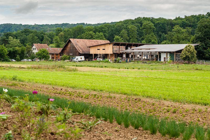Birsmattehof